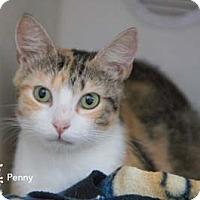 Adopt A Pet :: Penny - Merrifield, VA