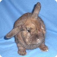 Adopt A Pet :: Frasier - Woburn, MA