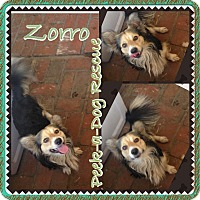 Adopt A Pet :: Zorro - South Gate, CA