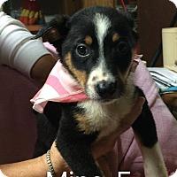 Adopt A Pet :: Mina - Buffalo, NY