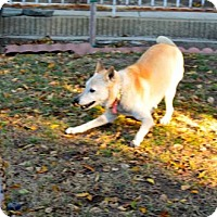 Adopt A Pet :: Bette - Los Alamitos, CA