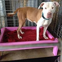 Adopt A Pet :: Nelly - Sarasota, FL