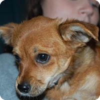 Adopt A Pet :: Zorra - Bradenton, FL