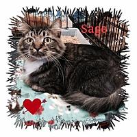 Adopt A Pet :: Sage - Harrisburg, NC