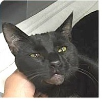 Adopt A Pet :: Thor - Springdale, AR