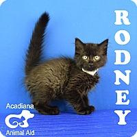 Adopt A Pet :: Rodney - Carencro, LA