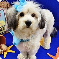 Adopt A Pet :: Ophelia - Irvine, CA