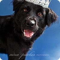 Adopt A Pet :: Hope - Marietta, GA