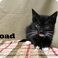 Adopt A Pet :: Toad - Melbourne, KY