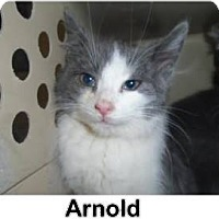 Adopt A Pet :: Arnold - THORNHILL, ON