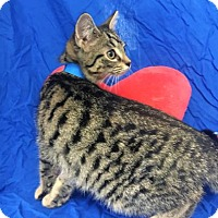 Adopt A Pet :: Barry - Monroe, MI
