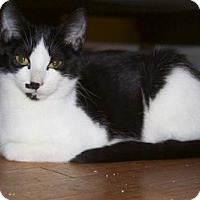 Adopt A Pet :: .Sage - Ellicott City, MD