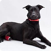 Adopt A Pet :: Ivysaur - Atlanta, GA