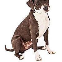 Adopt A Pet :: Hannah - Scottsdale, AZ