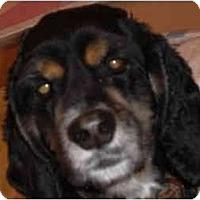 Adopt A Pet :: Pearl - Rigaud, QC