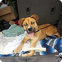 Adopt A Pet :: Luca - Vidalia, GA