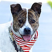 Adopt A Pet :: Cutie Bella-VIDEO - Woodland Hills, CA