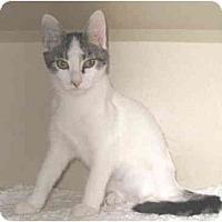 Adopt A Pet :: Tinker - Mesa, AZ