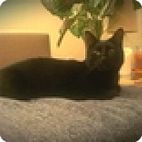 Adopt A Pet :: Darla - Vancouver, BC