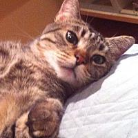 Adopt A Pet :: Lolita - Monrovia, CA