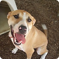 Adopt A Pet :: Sam - Fair Oaks Ranch, TX