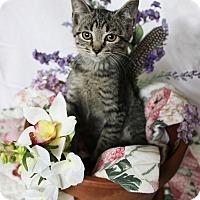 Adopt A Pet :: Heather - Charlotte, NC