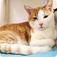 Adopt A Pet :: Louise - Bellevue, WA