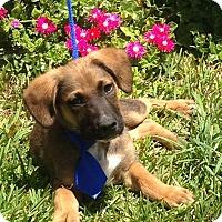 Adopt A Pet :: Bentley - San Diego, CA