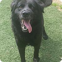 Adopt A Pet :: Duff - Nashville, TN