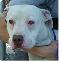 Adopt A Pet :: Yoda - Springdale, AR