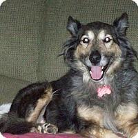 Adopt A Pet :: Shelley - Coldwater, MI