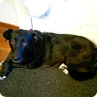 Labrador Retriever Mix Dog for adoption in Davenport, Iowa - Gabby