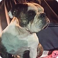 Adopt A Pet :: Pixie - Santa Ana, CA
