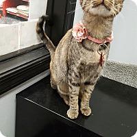 Adopt A Pet :: Nora - Pasadena, CA