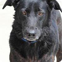 Adopt A Pet :: Evee - Yukon, OK