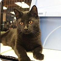 Adopt A Pet :: Midnight - Yardley, PA