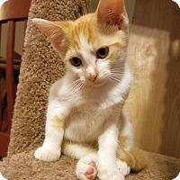 Adopt A Pet :: Starburst - Huntsville, AL
