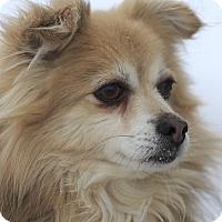 Adopt A Pet :: Taboo - Ile-Perrot, QC