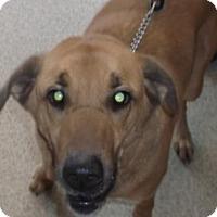Adopt A Pet :: MOOSE - Gloucester, VA