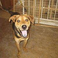 Adopt A Pet :: P J - San Antonio, TX