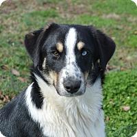 Adopt A Pet :: Carson - Westport, CT