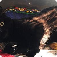 Adopt A Pet :: Prada - Lafayette, NJ