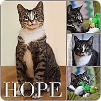 Adopt A Pet :: Hope - Chicago, IL