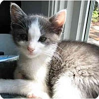 Adopt A Pet :: Grayson - Jeffersonville, IN