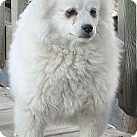 Adopt A Pet :: Bubbles - Columbus, IN