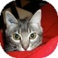 Adopt A Pet :: Isidore - Vancouver, BC