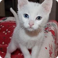 Adopt A Pet :: Otis - Davis, CA