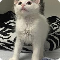 Adopt A Pet :: Cheryl - Mission Viejo, CA