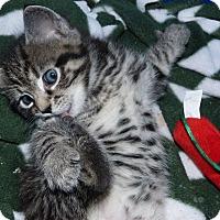 Adopt A Pet :: Stella - Stafford, VA