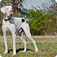 Adopt A Pet :: Takoda-VA - Virginia Beach, VA